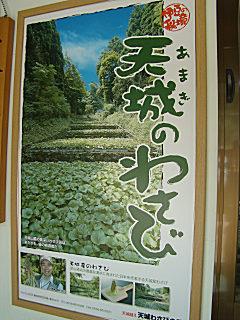 08わさびポスター.jpg
