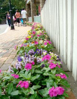 20ケープの花壇.jpg