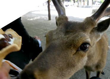 22広島10鹿にじり寄りっ.jpg