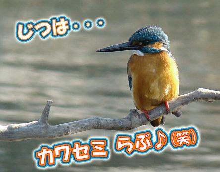 23カワセミらぶ♪.jpg