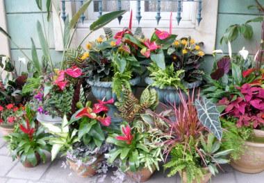 79ALトロピカルお花たち.jpg