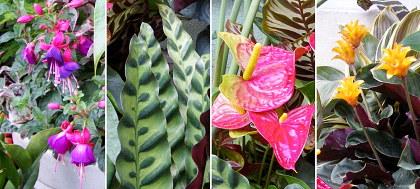 80ALトロピカルお花たち02.jpg