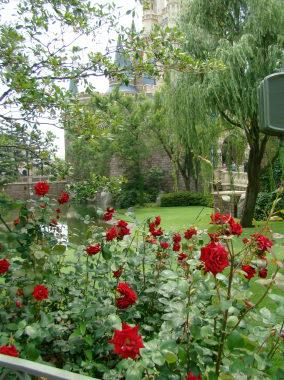 33プラザ赤いバラ.jpg