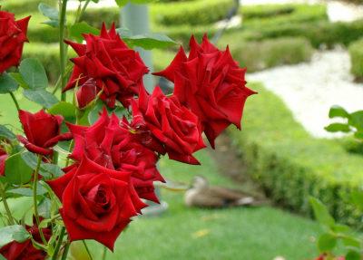 34プラザ赤いバラと幾何学模様.jpg