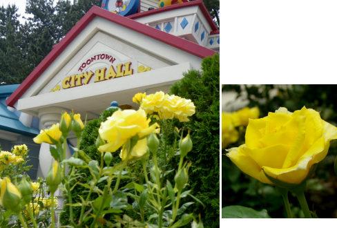 45TTシティホールの黄色いバラ1.jpg